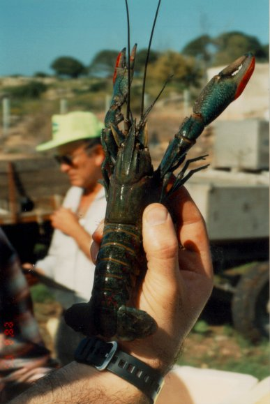 Raise Giant Red Claw Freshwater Crayfish !